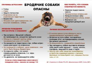 Бродячие собаки опасны... (1865146 v1)